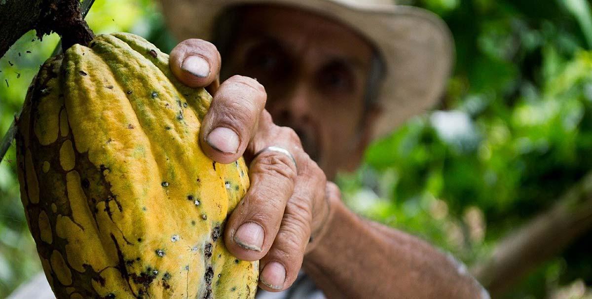origin of cocoa