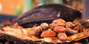 Cocoa VS Chocolate: know the difference