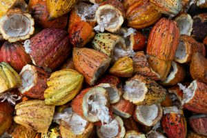 Cocoa myths about its influence on our health